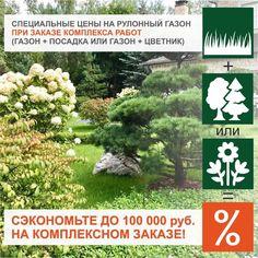 Гидропосев газона под ключ | Русские газоны The 100, Plants, Lawn, Flora, Plant, Planting