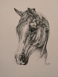 Quarter Horse  11 x 13  Pen and ink on canvas