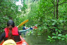 Paddling in a mysterious mangrove forest in Phang Nga Bay