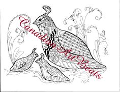 Quail Bird Fantasy Coloring Page Downloadable Printable Art by CanadianArtBeats on Etsy