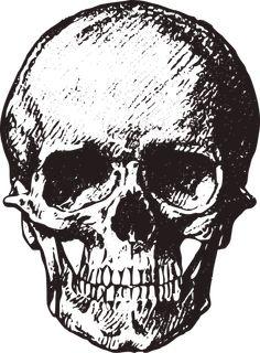 Skull, Vintage, Old, Horror, Macabre, Death, Halloween
