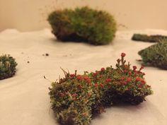 Moss to go on the driftwood via @plantjungle0569