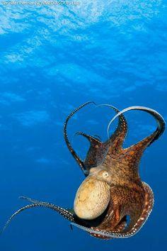 Запах Моря-The Smell Of The Sea– Сообщество– Google+