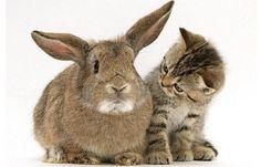 Cute Animal Friends | Super cute animal friends!  Source: barnorama.com