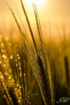~~raindrops in the sun | golden nature macro | by jwfoto1973~~