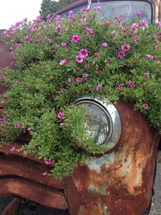 Flowers on an old truck