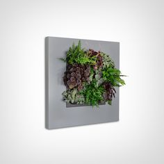 Located in Hawaii, we provide customized sustainable living plant wall design & systems. Our custom green wall systems bring the beauty of plants to your space. Plant Painting, Plant Art, Metal Wall Planters, Vertical Planter, Kitchen Herbs, Live Picture, Self Watering Planter, Office Plants, Unique Plants