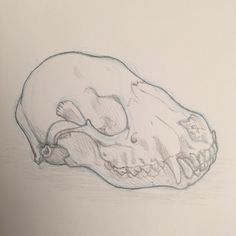 Quick sketch of a raccoon skull from my oddities collection. Skull Sketch, Quick Sketch, Art Work, My Arts, Artsy, Tattoo, Create, Drawings