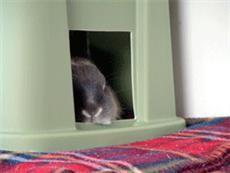 House Rabbit Habitats