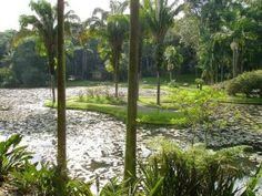 Casamentos inusitados: Jardim Botânico de São Paulo | O mundo girando, visto por meus olhos.
