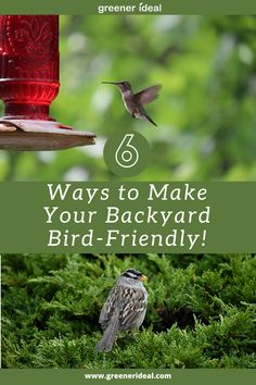 It's common for us to take birds for granted. We may catch a glimpse of one or two on the course of our daily routine, but most times we don't give much thought to our feathered friends unless we're out on a nature hike or trail where we can see them in their natural habitat. | How To Make Your Backyard Bird Friendly | Attract More Birds to Your Backyard | But Check out These 6 Ways to Make Your Backyard Bird-Friendly! #Nature #Environment #Bird #Birds #Animals #Backyard #Ecofriendly #GoGreen