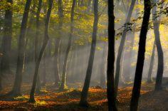 ***Light in the woods (no location given) by Yilmaz Kendirli