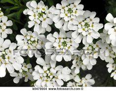 biely kvet - Hledat Googlem