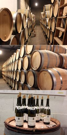Maison olivier leflaive, vinicola, vinho, frança, borgonha, natureza, gastronomia, viagens, parreira, uva, passeio, romance, paisagem