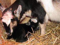 Kids, Kids, Kids - Whispering Tales Farm