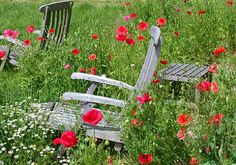 poppies and garden chairs - orchard