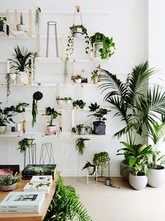 All things plant related at Ivy Muse Botanical Emporium Melbourne
