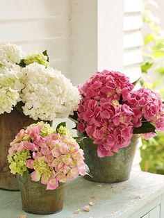 Some techniques that will help prolong your blooms:  -- Cut flowers in morning or evening, when it's cooler.  -- Bring a container outside and place stems in water as soon as you cut them.  -- Give stems a quick hot-water bath. Boil water and pour it into a container. Hold the bottom few inches of your hydrangea stem in the hot water for 30 seconds, then transfer to a vase with room-temperature water.