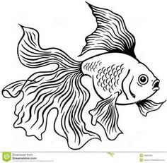 How to draw a goldfish desenhos de peixe pinterest for Wyoming game and fish draw results