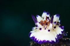 Dive into the bizarre and beautiful world of nudibranchs with this amazing photo gallery compiled from Scuba Diving Magazine's 2014 Photo Contest submissions!