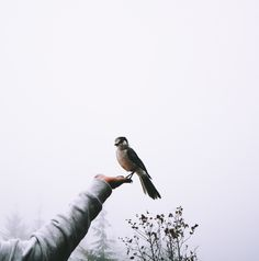 """""""So it's not just the walkers..."""" Daryl glanced over at the brunette as she cooed at the bird resting on her fingers """"... even the damn birds love you."""" She just smiled at him."""