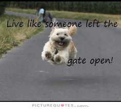 Live like someone left the gate open. Inspirational quotes on PictureQuotes.com.