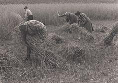 Jpg, Farming, Lion Sculpture, Elephant, Statue, September, Photography, Animals, Traditional