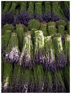 lavender lavender lavender #Kiehl's #AromaticBlends