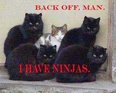 Ha, cat love