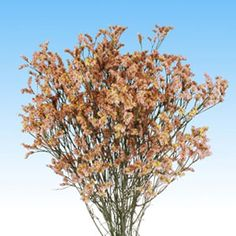 brown filler flowers - Google Search