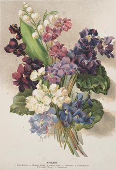 Jean Louis PrevostBouquet di rose, mughetto, anemoni e violette  (1790 1810).. Foto-gallery e immagini