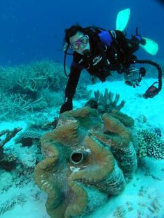 Growing up to 47 inches across, the giant clam (Tridacna gigas) is the largest bivalve mollusk in the world.  It is also one of the most endangered, as it is illegally harvested for home decor, gourmet dishes, and (supposedly) aphrodisiac properties.