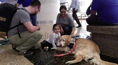 The Chhatrapati Shivaji International Airport, Mumbai did something that we wish every airport would emulate. They introduced 'Animal Assisted Therapy' in the form of three loveable, friend and trained Golden Retrievers.  ‪#Travel #AirTravel #WaitingHours