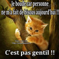 boude-pas-bisous chat trop mighonchat trop mignon et drole trop mignon dessinphoto de chat mignon et rigolochat drolevideos de chats trop mignonschat mignon dessin Cute Cats, Funny Cats, Funny Animals, Cute Animals, Humour Snapchat, Cat Species, Crush Humor, Post Animal, Little Kittens