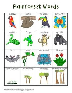 This is a pack of for your writing center or word wall. They are a set of rainforest words. This pack contains a full page list (color and black and white versions), word strips, and word wall cards. My kids love to use them to help them spell words or Rainforest Preschool, Rainforest Classroom, Rainforest Crafts, Rainforest Project, Preschool Jungle, Rainforest Habitat, Rainforest Theme, Rainforest Animals, Jungle Animals