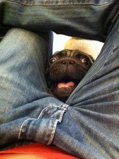 Curiosities: Pets are Weird