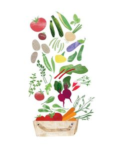 Endless Harvest Print - 8 x 10 redcruiser Heidi schweigert vegetable illustrations Plant Illustration, Watercolor Illustration, Watercolor Fruit, Veg Garden, Kitchen Wall Art, Kitchen Shop, Sustainable Food, Fruit And Veg, Fruit Food