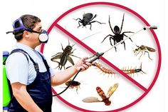 """We also  provide Pest Control Service to commercial and residential area with quick, effective, and at reasonable prices,  our best products which controls pests from your home, business, with experts and skilled professional that  gives """"insects or pest free"""" surroundings and environment to live happily and stress free."""