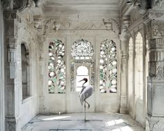 These striking, large-scale photographs fromKaren Knorr'sIndia Songseries are high on my wish list (a girl can dream!). Snapped in India between 2008 and 2014, Knorr first shot the ornate …
