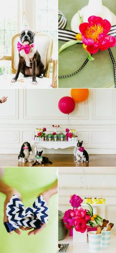 Puppy Party - @Michele Waggoner check out the cute Boston!