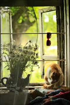 Cat in the window by zolgae - Pixdaus