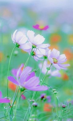 Amazing Flowers, Wild Flowers, Beautiful Flowers, Pretty Pictures, Cool Photos, Pretty Pics, Summer Screensavers, Garden Entrance, Bright Paintings