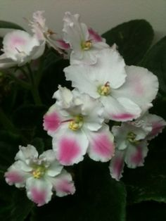 rhapsodie-rosalie.jpg (240×320)