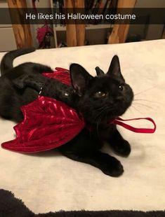 on – Cute – – Katzen Ideen - Baby Animals Cute Little Animals, Cute Funny Animals, Photo Chat, Cute Creatures, Pretty Cats, Beautiful Cats, Crazy Cats, Crazy Cat Lady, Cool Cats