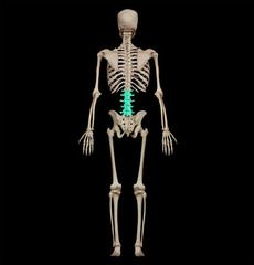 bones and bone markings: the axial skeleton flashcards | quizlet, Muscles