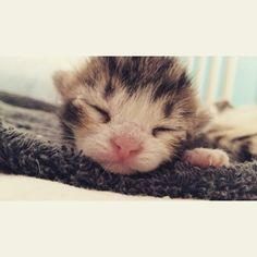 That face!!!! Here my cat was a few days old