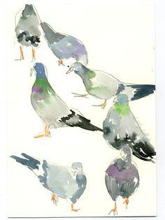 Ha, pigeons : Happy Menocal
