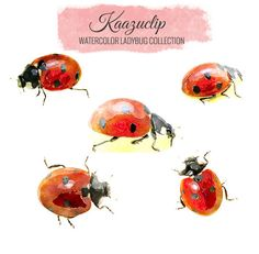 Watercolor Ladybugs Collection Commercial and by kaazuclip Watercolor Projects, Watercolor Sketch, Watercolour Painting, Watercolors, Snow Rose, Lady Bug Tattoo, Drawing Sketches, Drawings, Paper Animals