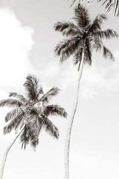 Palm Trees No. 1 - Black and white palm tree wall art by Cattie Coyle Photography Black And White Picture Wall, Black And White Pictures, Black And White Beach, Black And White Background, Black And White Prints, Black And White Posters, Palm Tree Background, Black And White Words, Grey Pictures