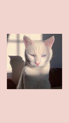 Cat cat wallpaper aesthetic pastel cat wallpaper & cat wallpaper aesthetic & ca Funny Cat Wallpaper, Tier Wallpaper, Cute Cat Wallpaper, Mood Wallpaper, Iphone Wallpaper Tumblr Aesthetic, Aesthetic Pastel Wallpaper, Animal Wallpaper, Cute Cartoon Wallpapers, Wallpaper Backgrounds